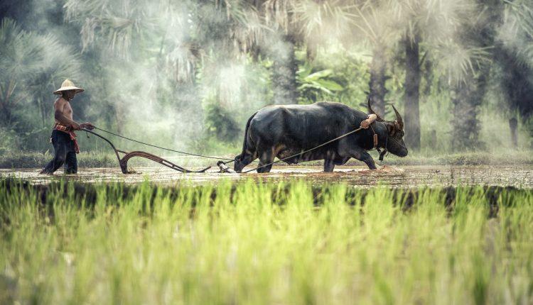 Lotta per i diritti dei contadini