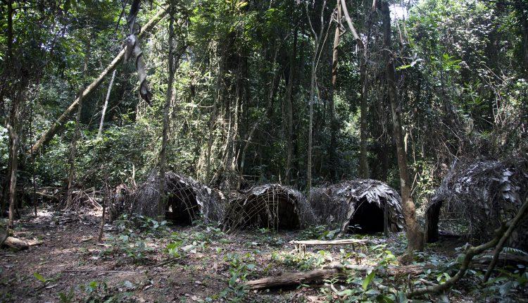 Diritti indigeni terra camerun