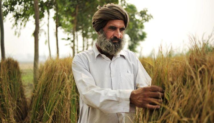 India contadini