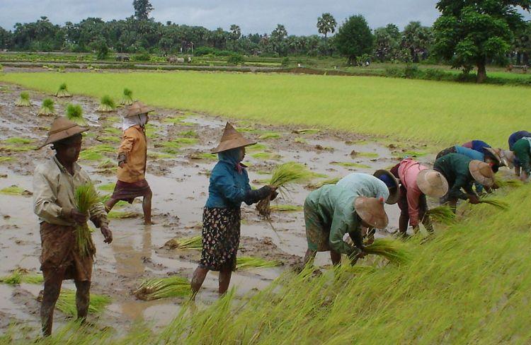 Rohingya terra