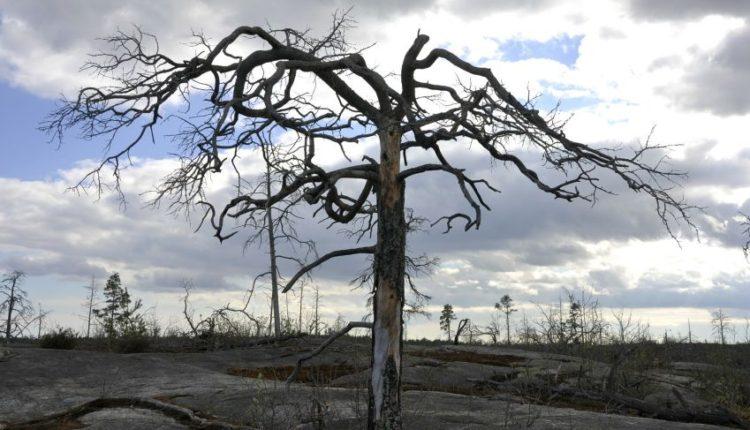 Alberto secco, cambiamenti climatici