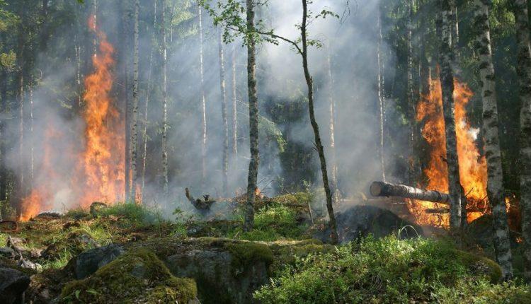 Bosco va a fuoco per cambiamenti climatici