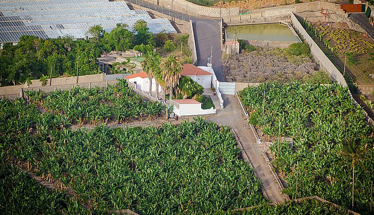 banane piantagioni