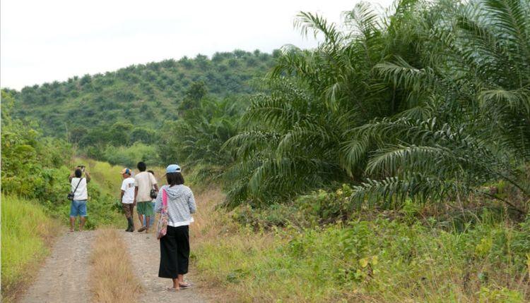 filippine palawan