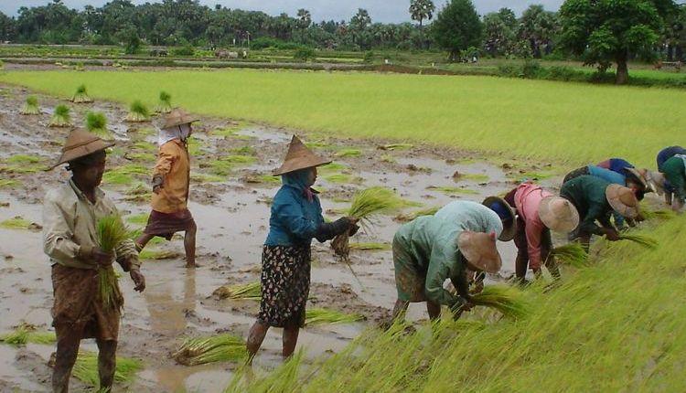 rohingya bangladesh