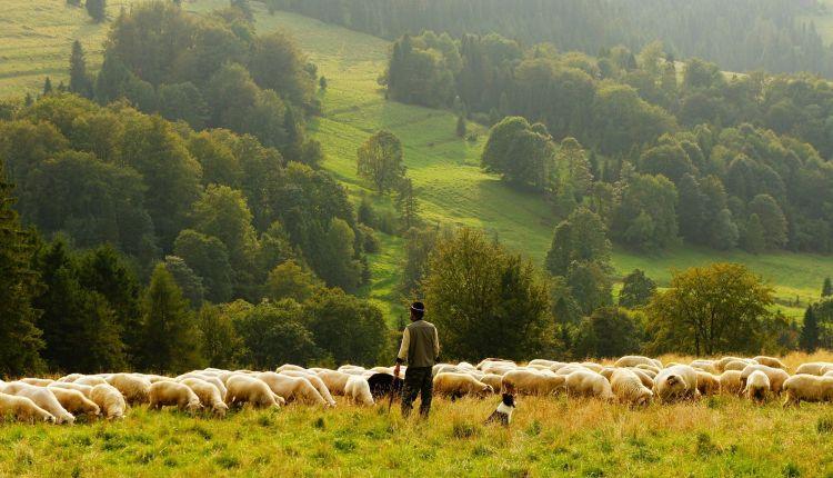 agricoltura industriale definizione