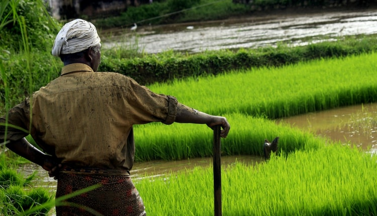 diritto al cibo nel mondo
