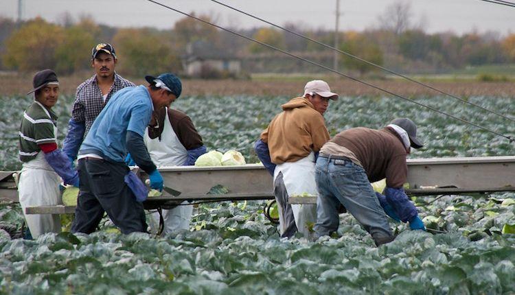 Immigrazione in Italia: dal dumping sociale al reddito di cittadinanza
