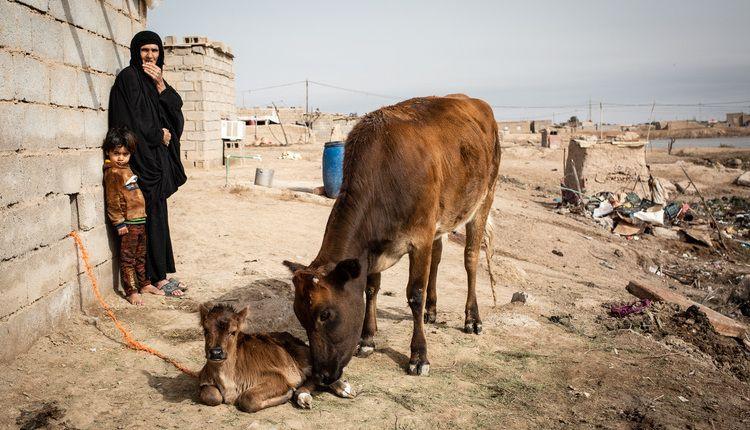 Iraq: popolazione in fuga dai campi per mancanza d'acqua