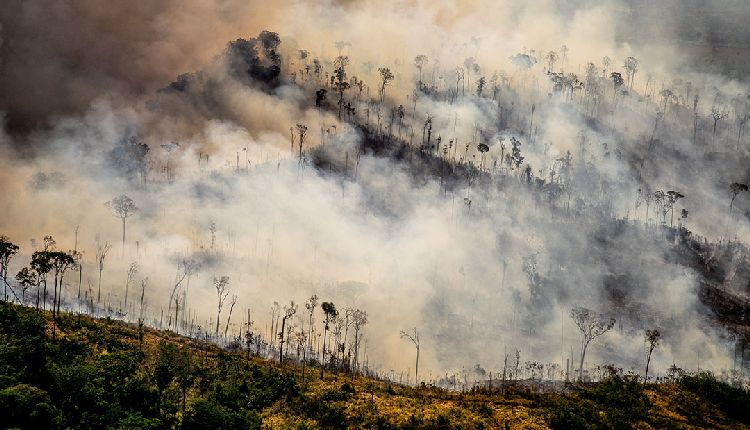 amazzonia in fiamme oggi