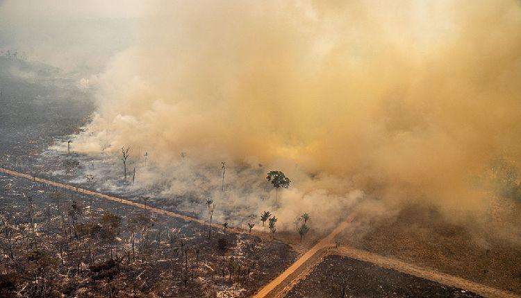 amazzonia in fiamme perché