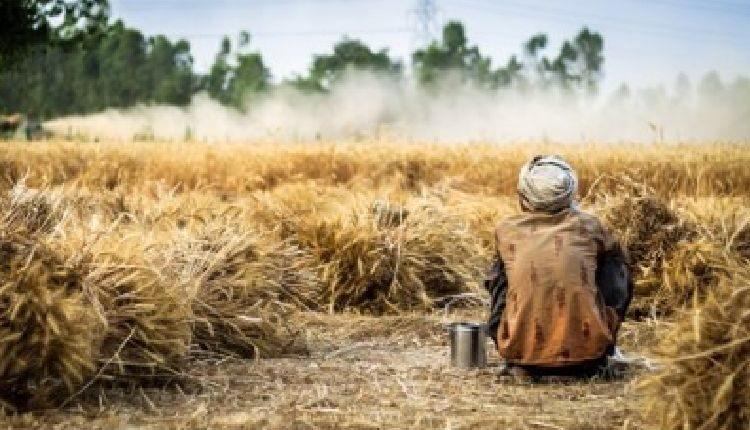 cibo e diritti umani