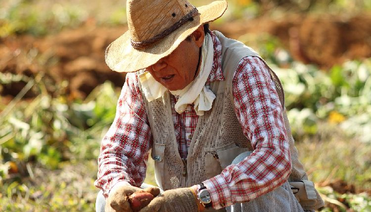 Exploitation of agricultural workers