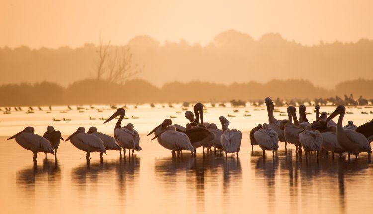 tutela della biodiversità riassunto